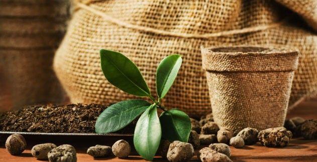 Caffè al ginseng: alla scoperta delle proprietà e degli ingredienti