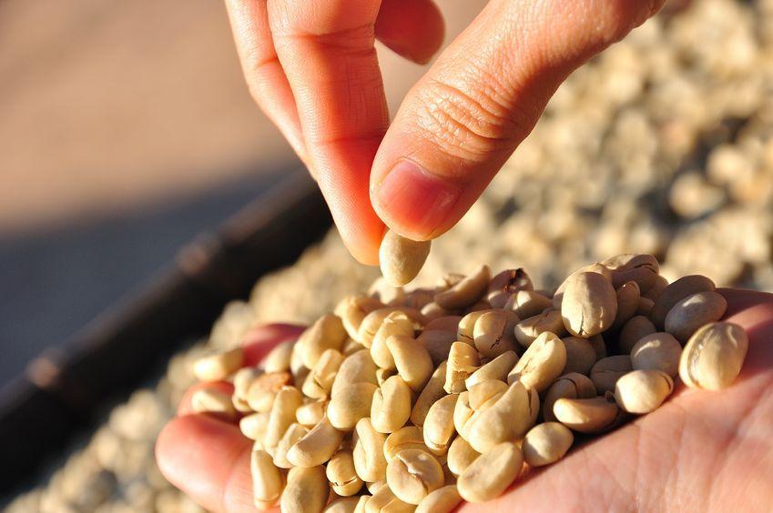 Caffè bio, equo e solidale: non solo aroma, ma scelte etiche