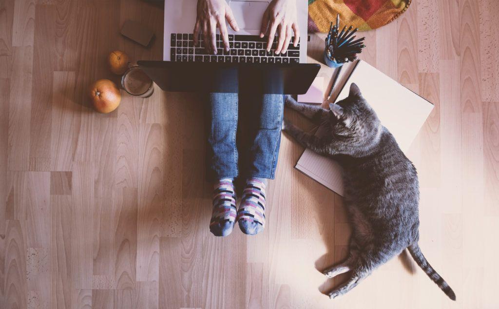 Cat Cafè: i locali più carini in cui bere un caffè e coccolare un micio