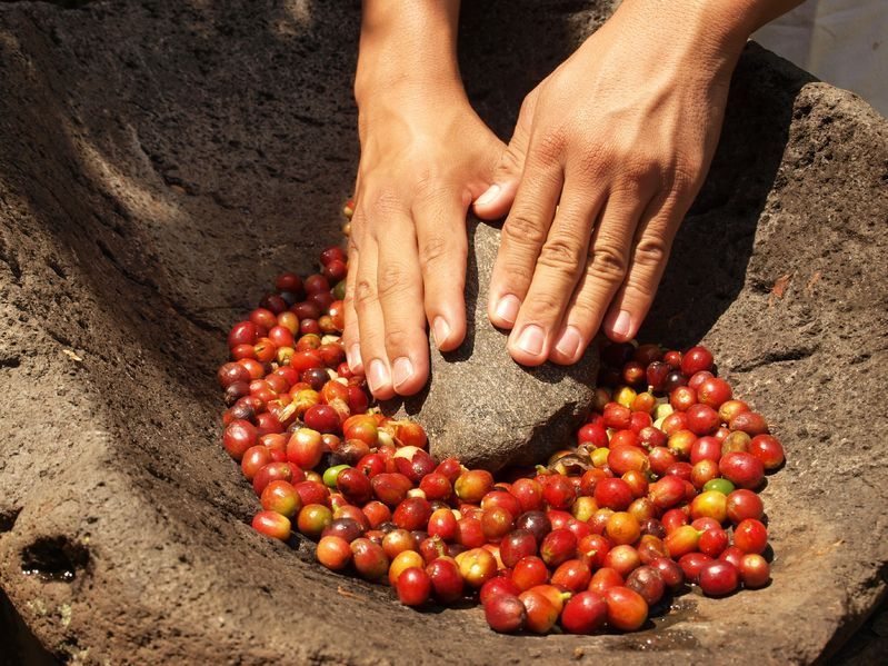 propriétés café arabica
