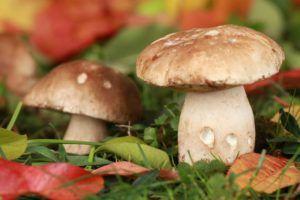 Coltivare funghi con i fondi del caffè