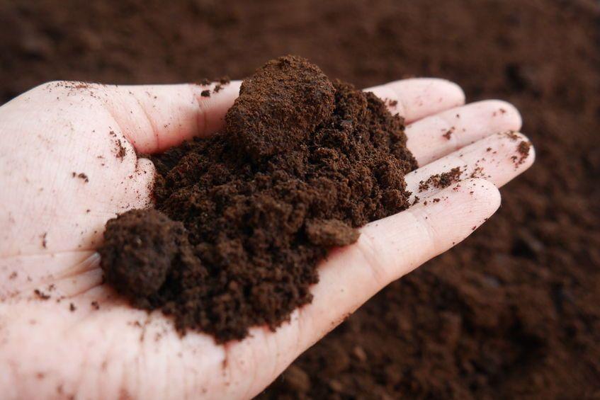 fondi caffè giardinaggio