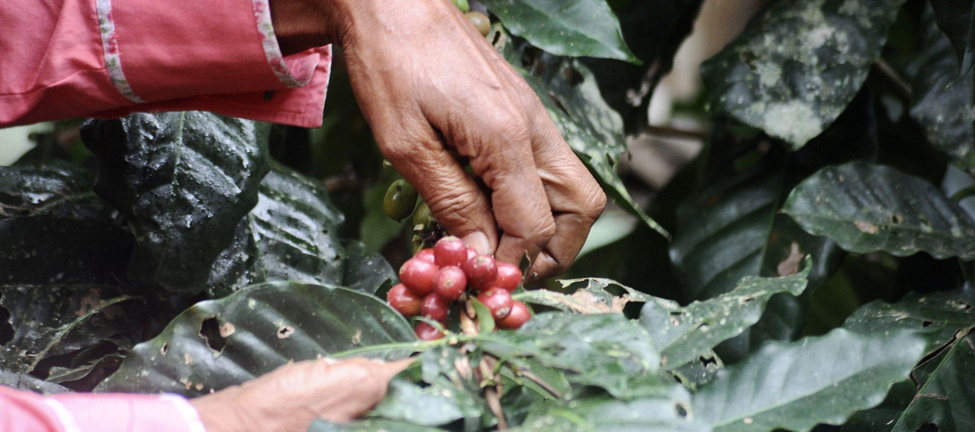 Caffè Vergnano supports Women coffee producers