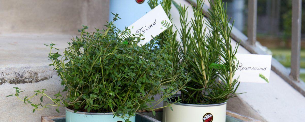 herb garden 5 1200x480