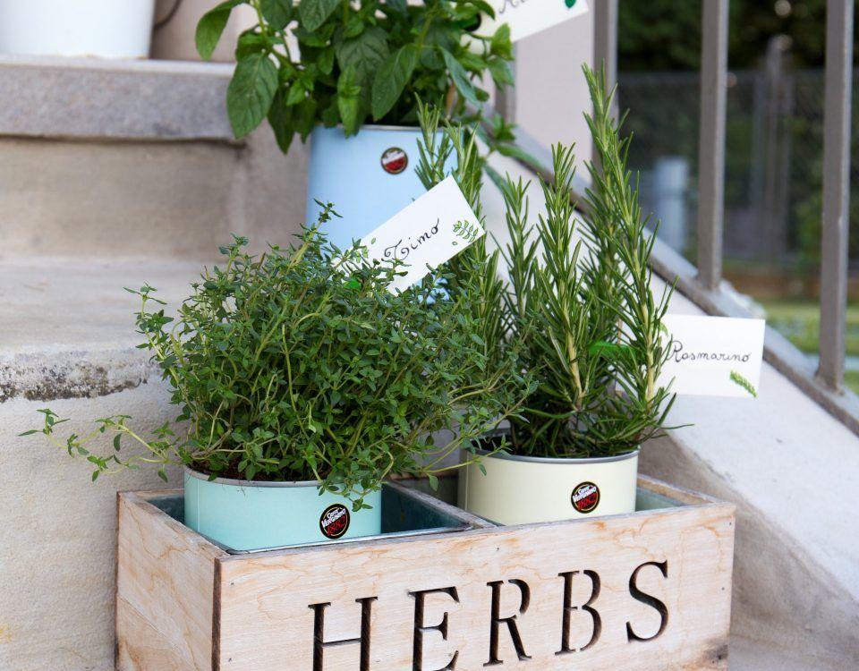 herb garden 5 960x750