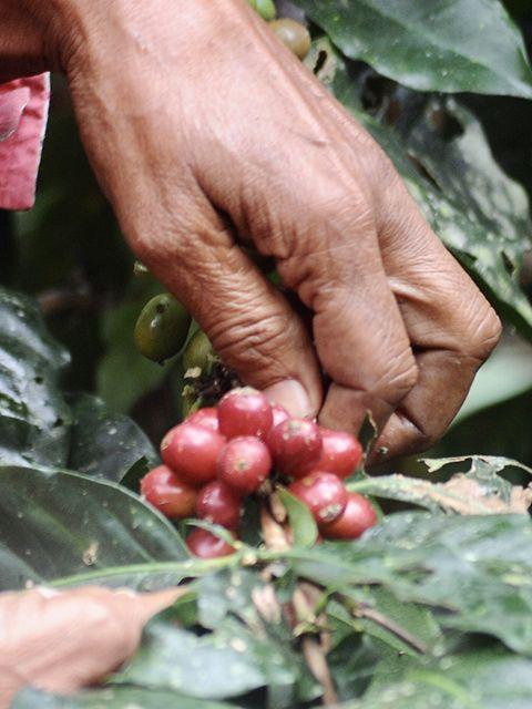 women in coffee mbl