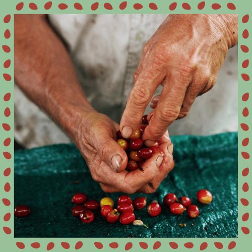 valorizziamo le donne in piantagione